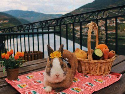 ¿Qué comen los conejos enanos? conejo enano se alimenta con fruta y verduras