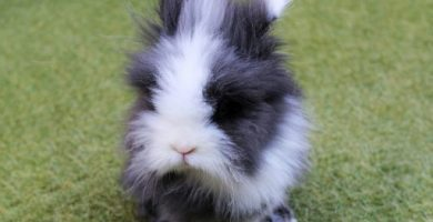 Los mejores nombres para conejos enanos