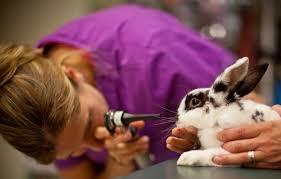 Enfermedades mas comunes en los conejos enanos