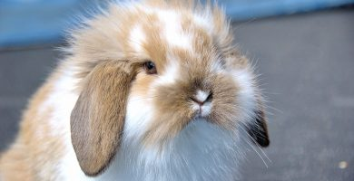 como evitar golpes de calor en conejos enanos
