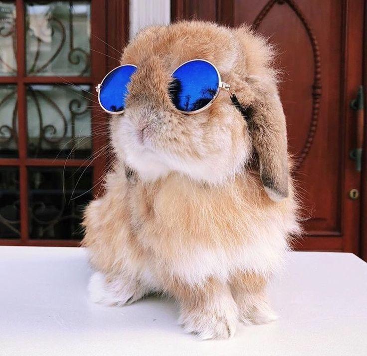 conejo con gafas de sol cuidados de conejo en verano