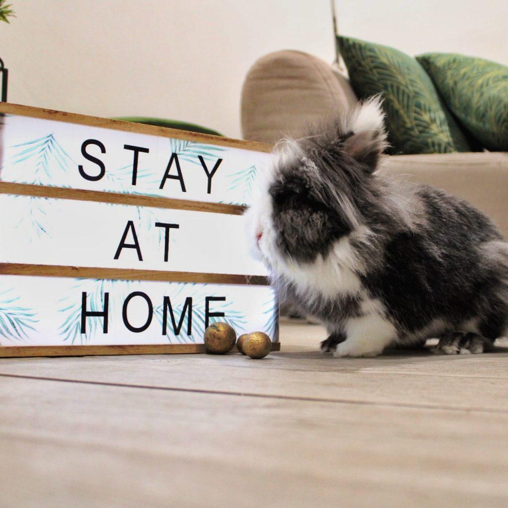 Que hacer con mi conejo enano en vacaciones - dejarlo en casa o en residencia