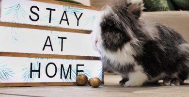 Donde-dejar-a-mi-conejo-en-vacaciones