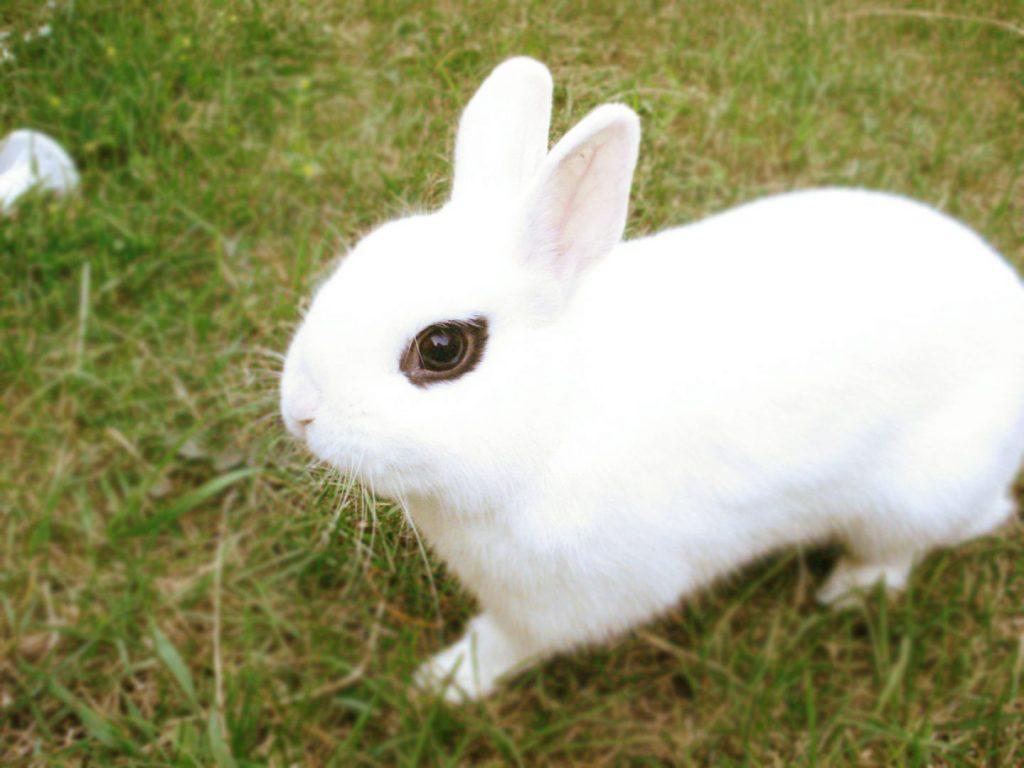 conejo blanco corriendo por la hierba