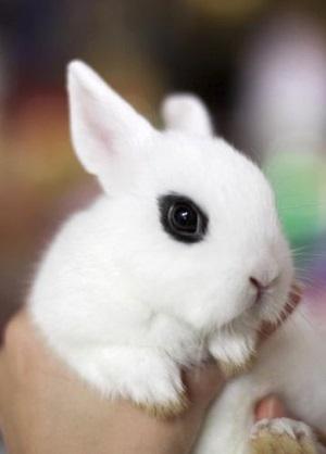 precioso conejito con ojos negros