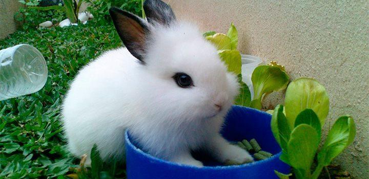 pequeña mascota comiendo