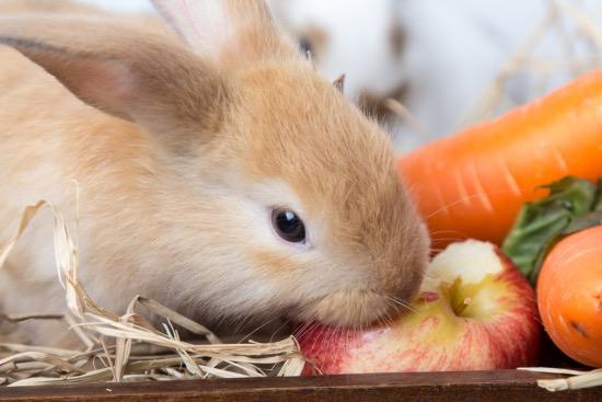 cuales son los alimentos prohibidos para los conejos