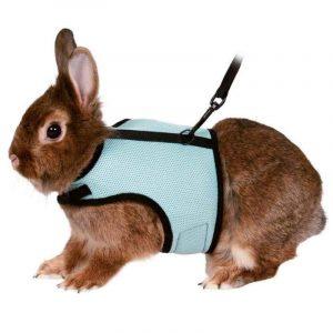 arnes azul para conejos enanos