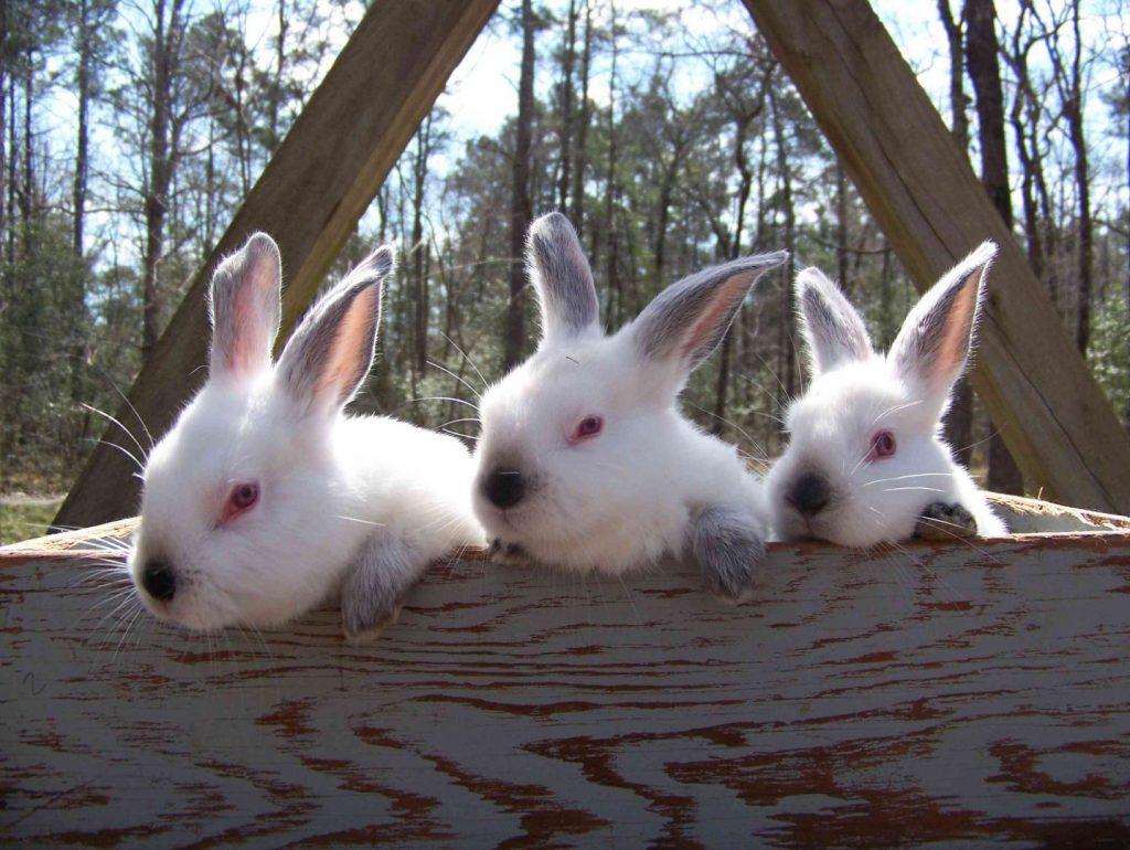 imagen de tres adorables conejitos bebés juntos