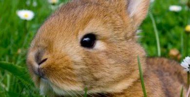 consejos para salir a pasear con mi conejo