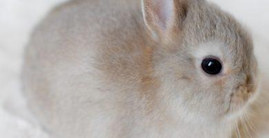 como cuidar a conejos enanos recién nacidos