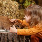 como ganarme la confianza de mi conejo