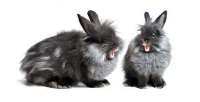 que hacer si mi conejo me muerde