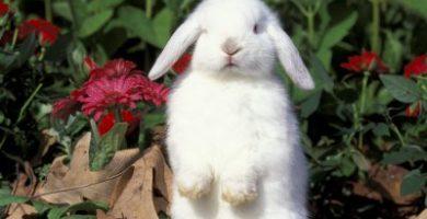 que quiere decir mi conejo cuando se apoya sobre sus patas traseras