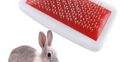 Cepillo de pelo para conejos enanos