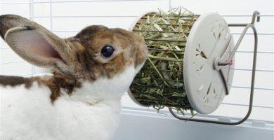 Causas por las que un conejo no come heno y sus soluciones