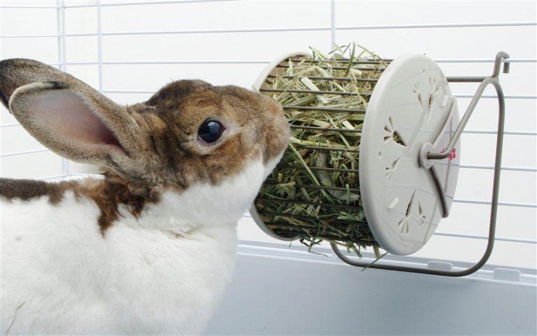 Mi conejo no come heno ¿Qué hago?
