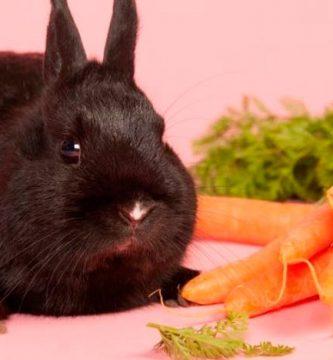 ¿Los conejos pueden comer zanahoria?