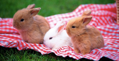 Conejos-bebes-marrones-y-blanco