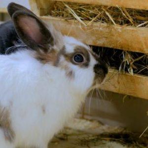 los-conejos-pueden-comer-pan-que-comen