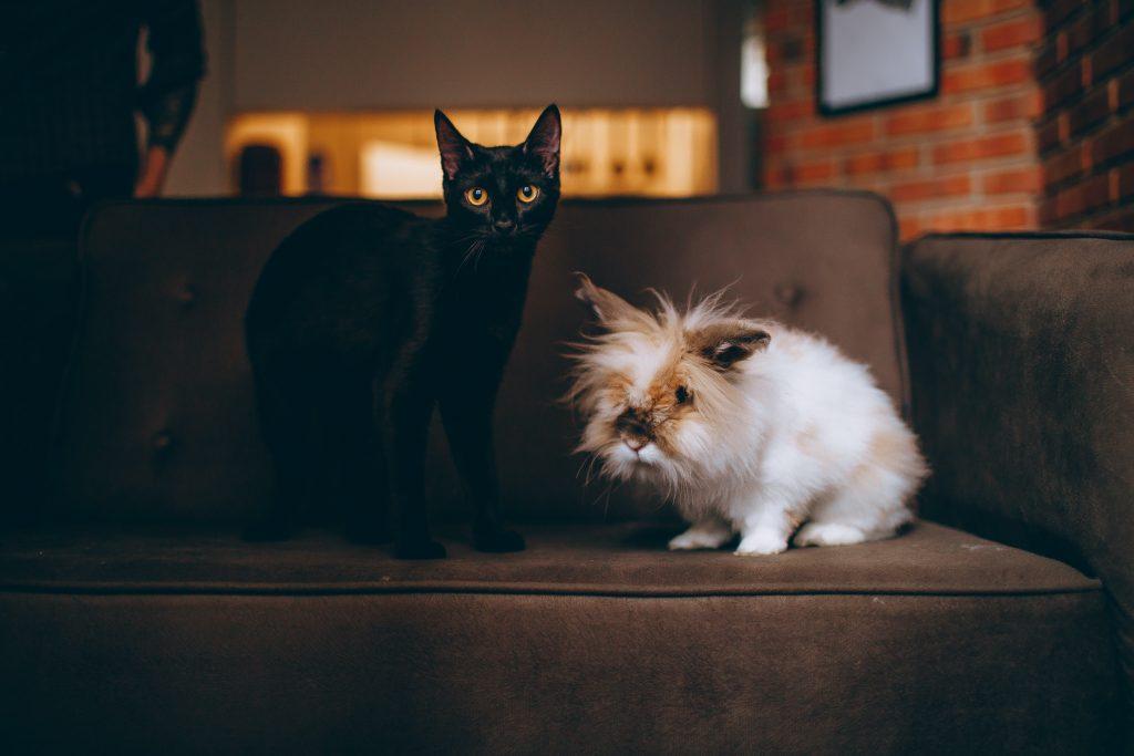Relación entre conejos y gatos
