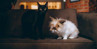 Relacion-entre-conejos-y-gatos