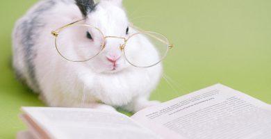 ¿Los conejos pueden comer plátano? - información sobre los conejos