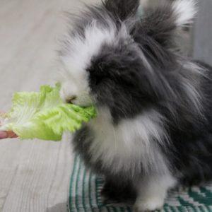 que-frutas-y-verduras-pueden-comer-los-conejos